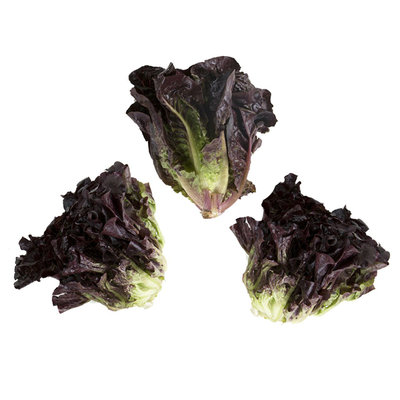 Lettuce Red Little Gem
